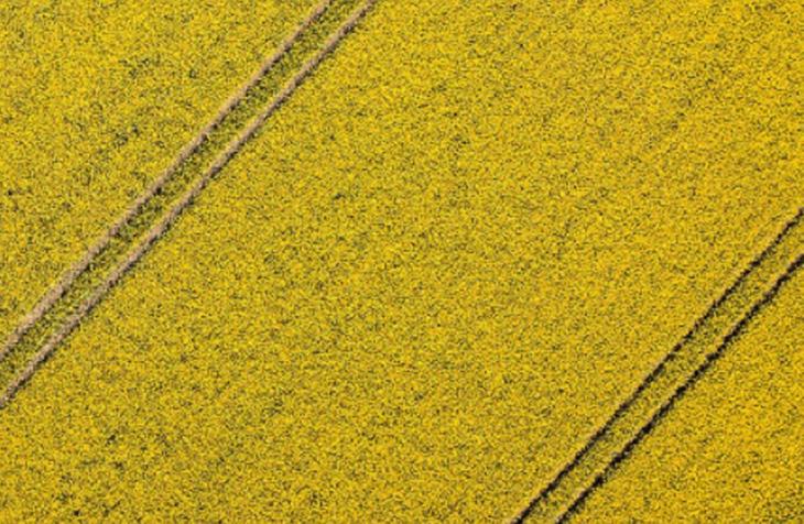 Moore Barlow - Sector - Rural